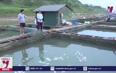 Hàng chục tấn cá lồng chết do thay đổi thời tiết