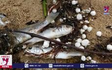 Cá chết nhiều bất thường ở biển huyện Nghi Lộc, Nghệ An