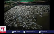 Điều tra nguyên nhân cá chết bất thường ởDầu Tiếng