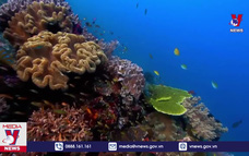"""Hơn 90% các rạn san hô """"lâm nguy"""""""