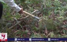 Cảnh báo nguy cơ cháy rừng ở Bình Định