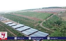 Núp bóng các dự án nông nghiệp để hưởng lợi chính sách