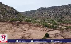 Hiệu quả mô hình trồng rừng trên núi đá ở Ninh Thuận
