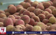 Hệ thống siêu thị tiêu thụ vải thiều Bắc Giang