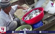 Cá Mòi – Đặc sản trời cho trên sông Hồng