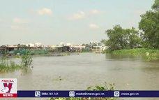 Sạt lở đê bao sông Cổ Chiên, thiệt hại gần 4 tấn cá giống