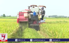 Bắc Giang đảm bảo sản xuất nông nghiệp trong mùa dịch COVID-19