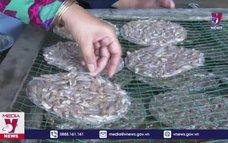 Kon Tum phát triển kinh tế cùng lòng hồ Sê San