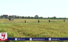 Nam Định được mùa vụ lúa xuân