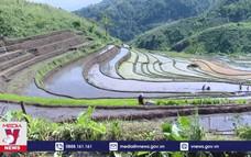 Lai Châu tập trung gieo cấy vụ mùa