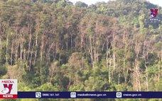 Nhiều diện tích rừng trồng chết khô chờ dự án