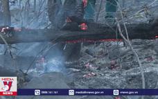 Bình Định kịp thời dập tắt cháy rừng trên núi Bà Hỏa