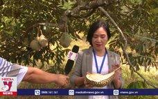 Pahang – quê hương trái sầu riêng nức tiếng Musang King