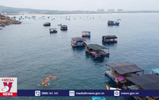 Bảo vệ rạn san hô ven biển Quy Nhơn