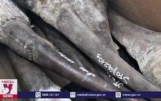 Đà Nẵng bắt giữ lô hàng hóa nghi sừng tê giác