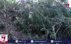 Điện Biên đình chỉ Hạt trưởng Kiểm lâm để xảy ra phá rừng