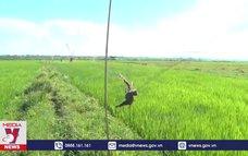 Tận diệt chim trời tại xã Binh Đào, Quảng Nam