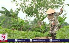Nông dân tham gia bảo hiểm xã hội tự nguyện