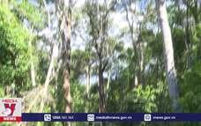 Tăng cường canh giữ Khu bảo tồn thiên nhiên An Toàn