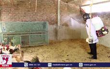 Phòng chống cúm gia cầm H5N8