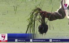 Đền bù thiệt hại cho nông dân sau vụ thi công tắc trách