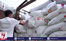 Tây Ninh bắt vụ buôn lậu hơn 170 tấn đường