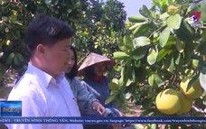 Phát triển thương hiệu cây có múi Lục Ngạn, Bắc Giang