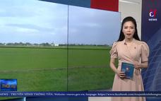 Bạc Liêu sẽ thiệt hại hơn 10.000 ha lúa và 9.000 ha tôm do hạn mặn
