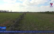Hàng nghìn ha lúa ở Trà Vinh mất trắng do hạn mặn