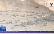 Trà Vinh khuyến cáo các hộ nuôi tạm ngưng thả giống cá lóc