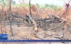 Hơn 100 ha rừng thông bị khai tử tại Đắk Nông