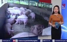 Bạc Liêu công bố hết dịch tả lợn châu Phi