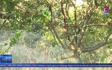 Hiệu quả các cống điều tiết nước vận hành sớm tại Trà Vinh