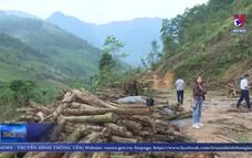 Cần sớm khai thác gỗ rừng trả lại đất cho người dân