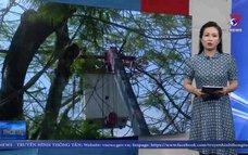 Hải Phòng xử lý 119 cây xanh có nguy cơ mất an toàn cao