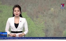 Kon Tum điều tra vụ cháy hơn 12ha thông ở huyện Kon Plông