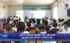 Đầu tư nông nghiệp của Việt Nam thu hút lao động Campuchia