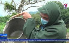 Hà Giang tập trung ngăn chặn dịch tả lợn châu Phi