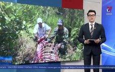 Truy bắt nhóm săn trộm bò tót trong VQG Cát Tiên