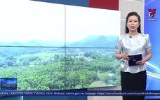 Tuyên Quang mở rộng hơn 10.000 ha rừng FSC