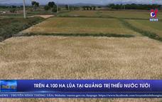 Trên 4.100 ha lúa tại Quảng Trị thiếu nước tưới