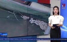 Làm rõ nguyên nhân cá bè chết trên sông Đồng Nai