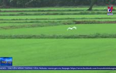 Thái Lan điều chỉnh chiến lược lúa gạo