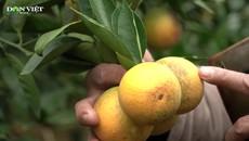 Phát triển chuỗi liên kết trồng cây ăn qủa, nông dân Sơn La bỏ túi cả trăm triệu đồng mỗi năm