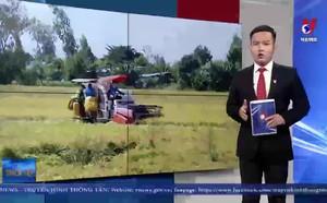 Kiên Giang sản xuất hiệu quả vụ lúa Hè Thu và Thu Đông