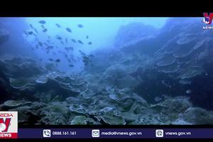 Bãi biển Côn Đảo vào top đẹp nhất thế giới
