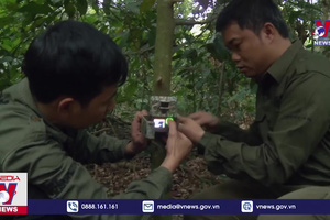 Người Việt đoạt giải thưởng môi trường danh giá