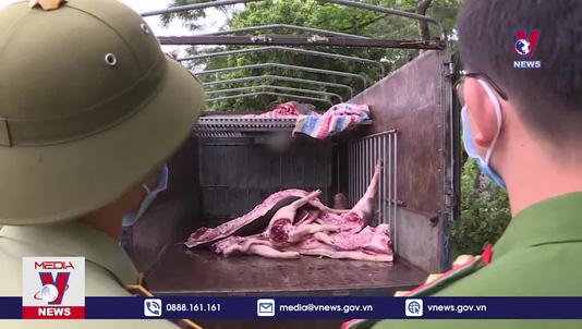Bắt giữ và tiêu hủy hơn 1 tấn lợn nhiễm dịch bệnh tả lợn Châu Phi