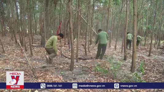 Đắk Lắk tăng cường phòng chống cháy rừng cao điểm mùa khô