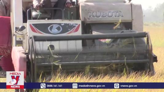 Nguy cơ gạo Việt xuất khẩu bị mạo danh